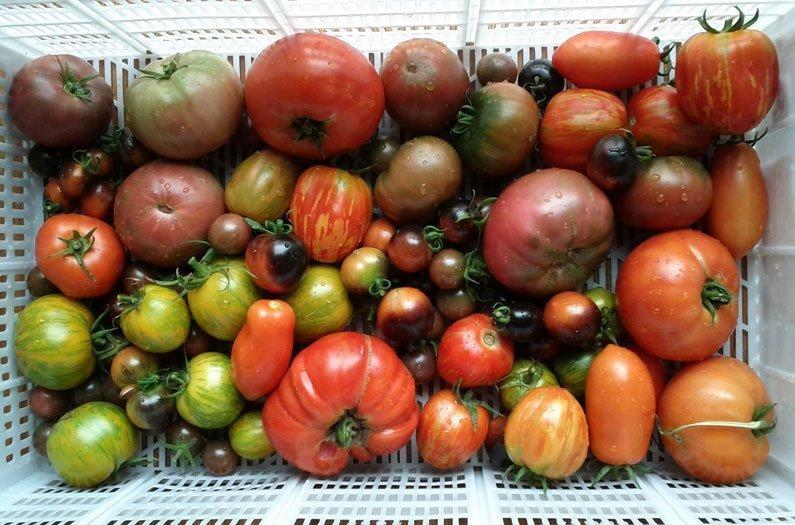 Can local food feed an urban world?