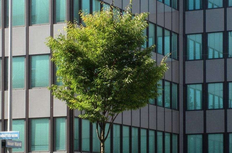 Las plantas de la ciudad pueden disminuir la calidad del aire durante las olas de calor