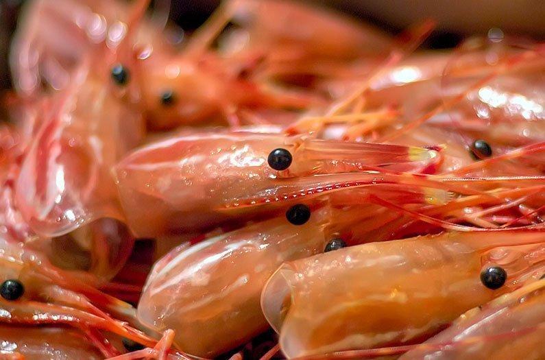 Un plastique biodégradable fait à partir de carapaces de crevettes
