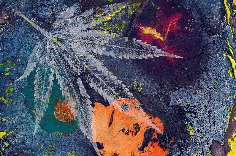 Faire face au coût environnemental de la marijuana