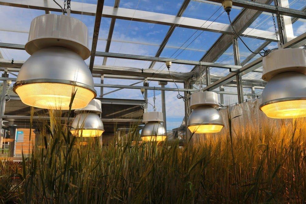 Rápido crecimiento de cultivos para alimentar al mundo.