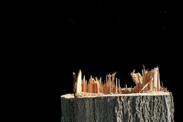 Las ciudades en los Estados Unidos están perdiendo árboles justo ahora que han descubierto sus beneficios