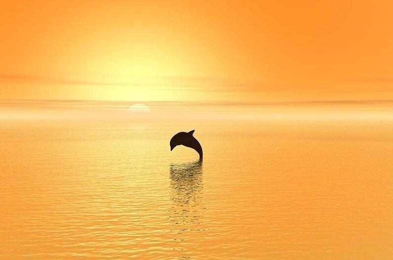 ¿Se afligen los delfines? Reconsiderando la conservación en el Antropoceno