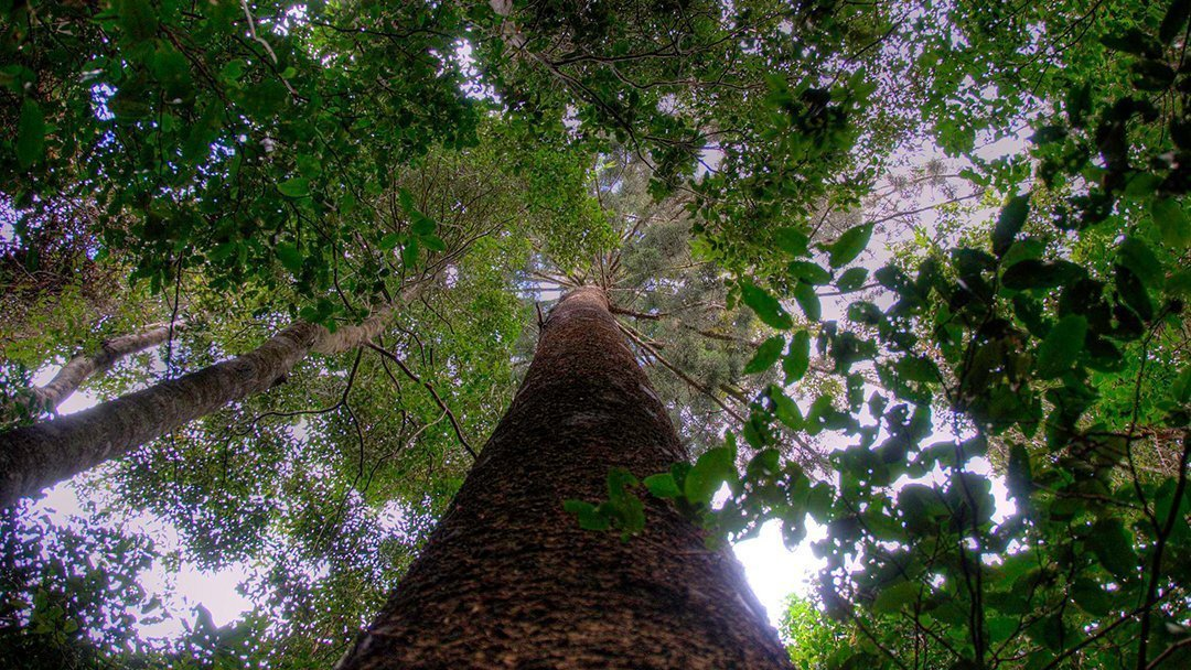 All forests are not equal in the carbon count