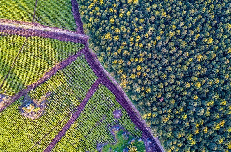 Con la mitad del planeta reservado para la naturaleza, ¿tendremos suficiente para comer?