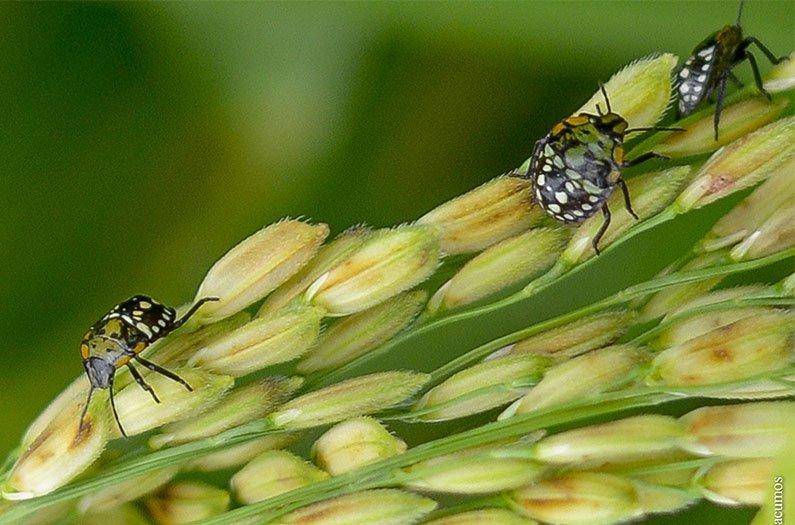 A medida que se vuelve más y más caliente, los insectos vendrán por nuestros cultivos