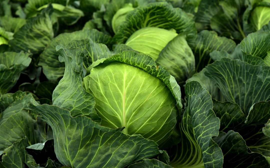 Para reducir las emisiones, comer verduras, no comer localmente, es la clave