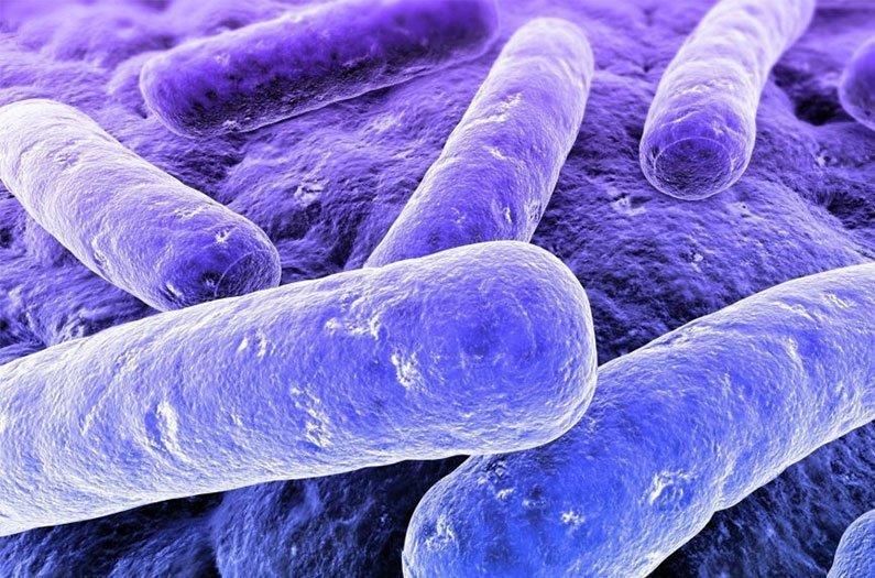 Bacterias púrpuras convierten los desechos humanos en combustible renovable.