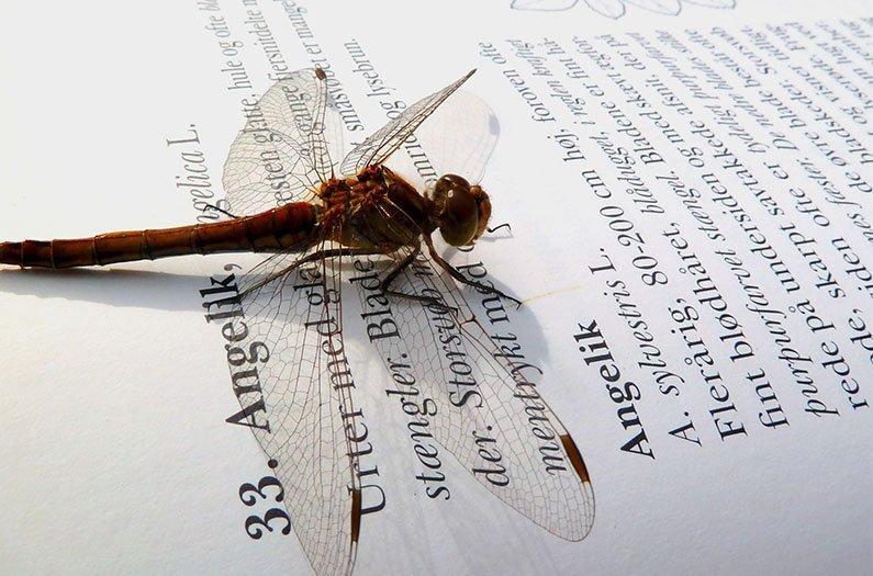 Los insectos están desapareciendo… de los libros de texto de biología.