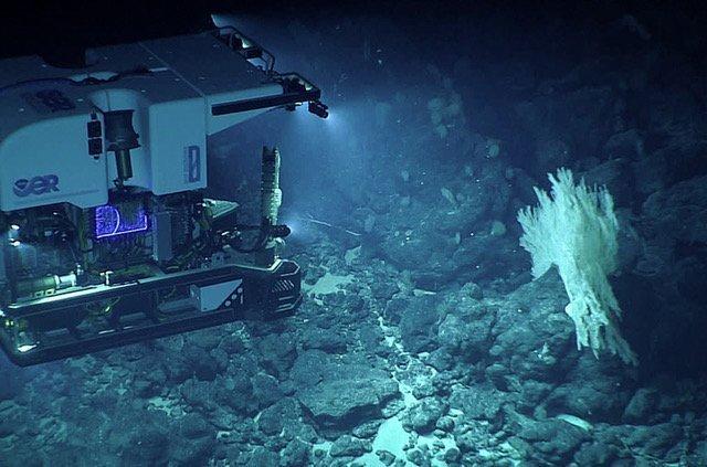 La próxima frontera de la restauración del ecosistema: el mar profundo