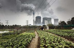 coal pollution and crops