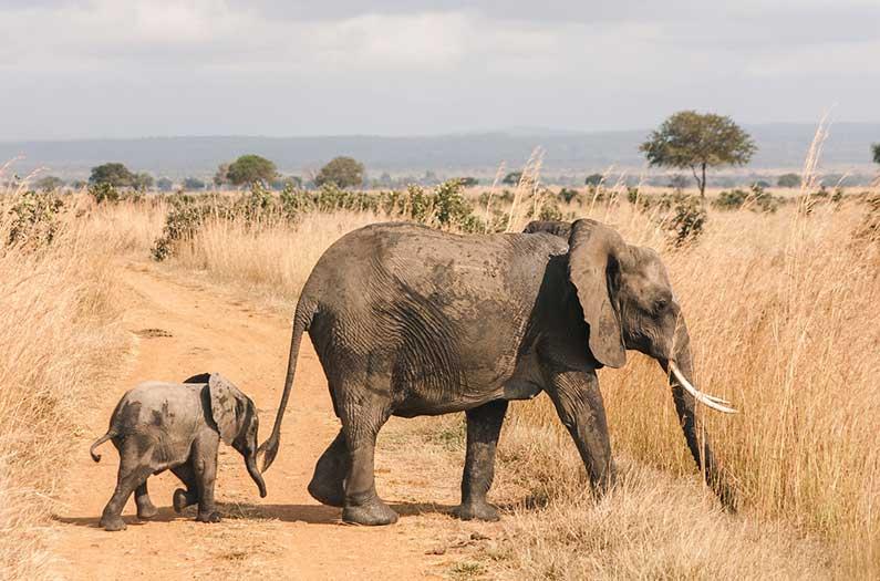 ¿Deberían los elefantes ser considerados refugiados?