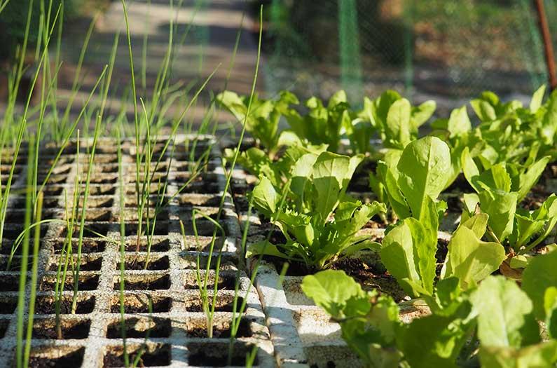 Los investigadores calcularon cuánta comida podrían producir los espacios verdes urbanos