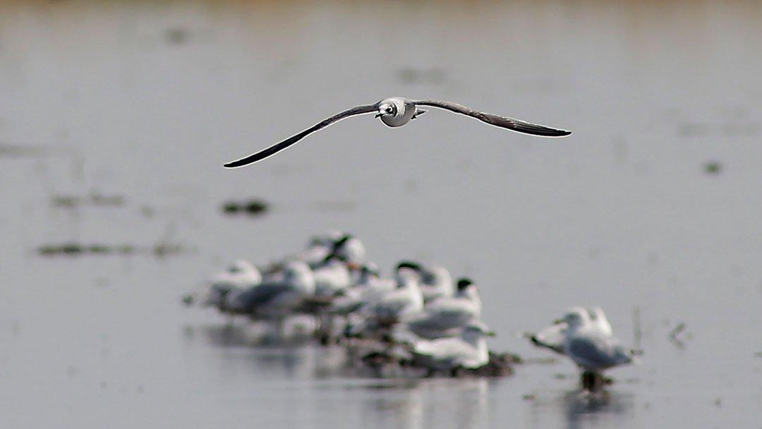 Nature Conservancy Bird Returns