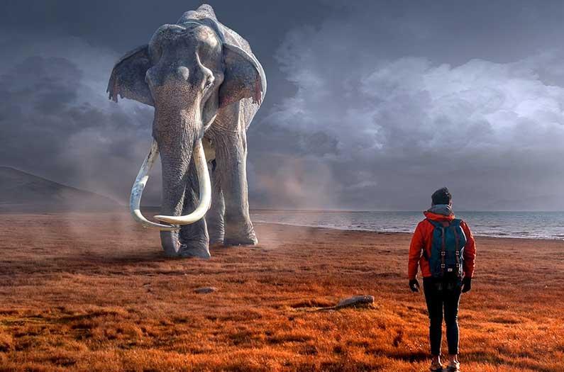 Think before you de-extinct