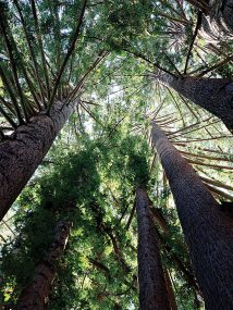 Can trees mitigate climate change
