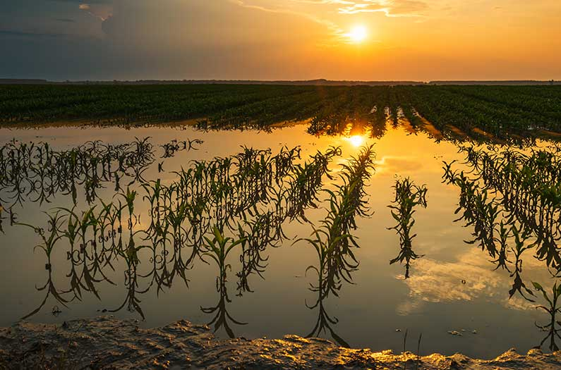 Researchers get closer to the goal of flood-proof crops