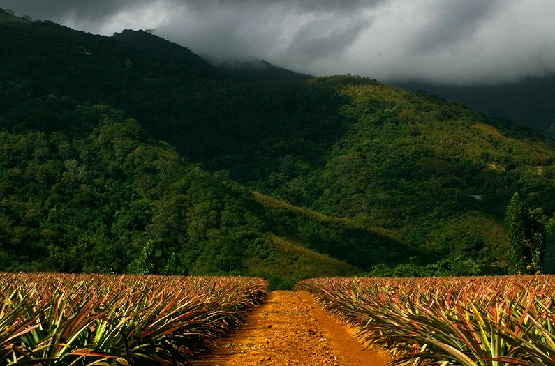 There's more cropland in protected areas than we might think