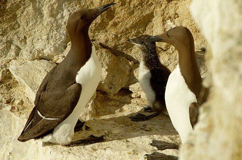 Researchers used Covid lockdown to show how tourism can protect vulnerable seabirds