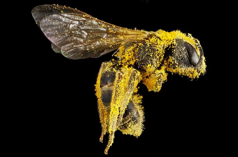 The global pollination 'trade' reveals how crucial biodiversity is to food security