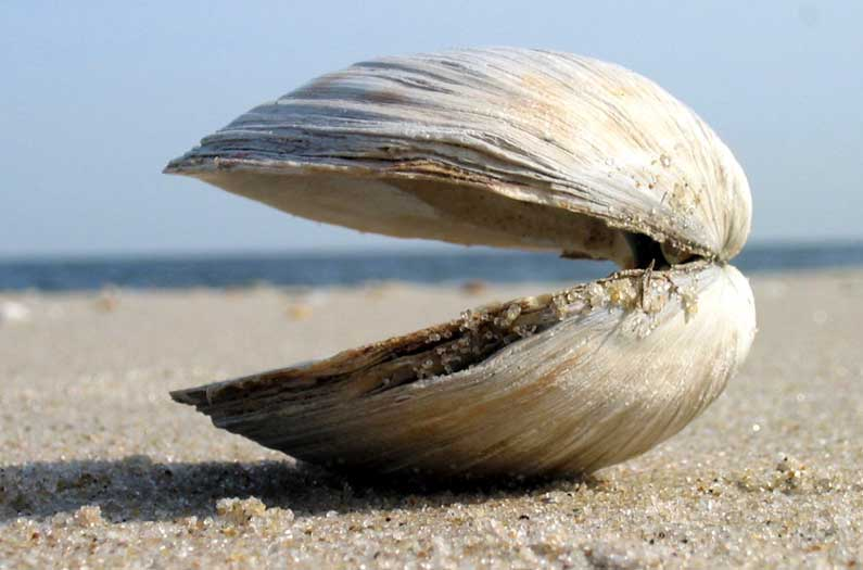 Researchers calculate the value of bivalves' appetite for pollution. It's huge.