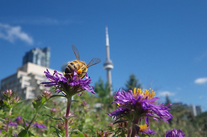 Trailblazing research uncovers urban gardens as a hidden powerhouse for pollinators