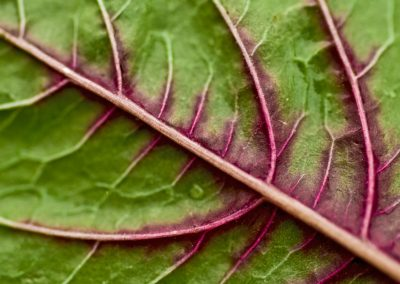 The veiny structure of a spinach leaf could be the perfect scaffold for lab-grown meat