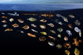 Cross-sectional view of approximately 30 fish, octopi and crustaceans under the surface of the ocean.