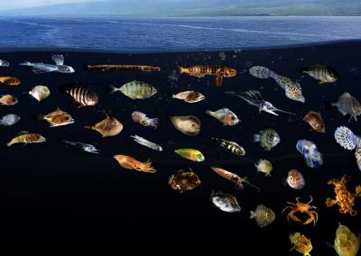 Researchers connect the dots between aquatic biodiversity and human nutrition
