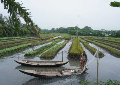 An ingenious system of farming on floating hyacinth mats offers climate resilience