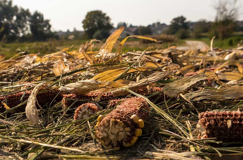 Leaving crop residues to rot could be an unexpected boon for climate mitigation