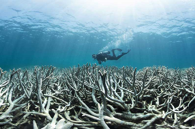 Probiotics could help save overheated coral