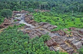 logging in protected areas | Anthropocene