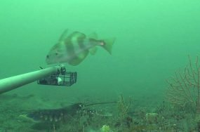 Lyme Bay Marine Reserve | Anthropocene