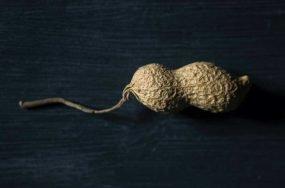 Peanut crop diversityt | Anthropocene