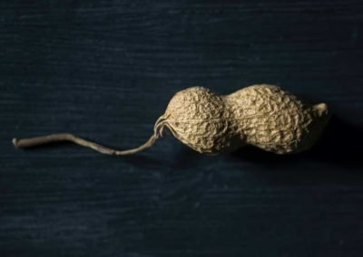 The humble peanut reveals how seed sharing makes crops more resilient in a warming world