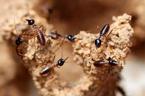 Termites and climate change | Anthropocene