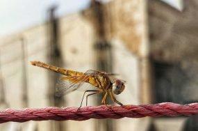 insect apocalypse | Anthropocene